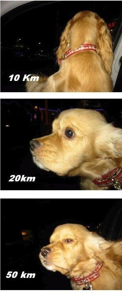 Собака vs ветер