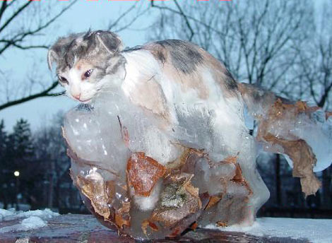 frozen_kitty.jpg