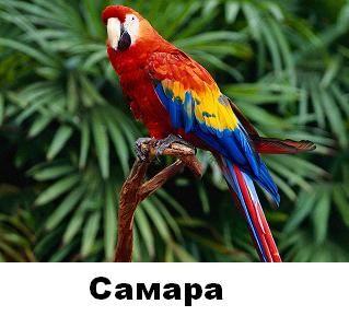 Самыми яркими нарядами могут похвастаться попугаи ара, обитающие в лесах Центральной и Южной Америки.