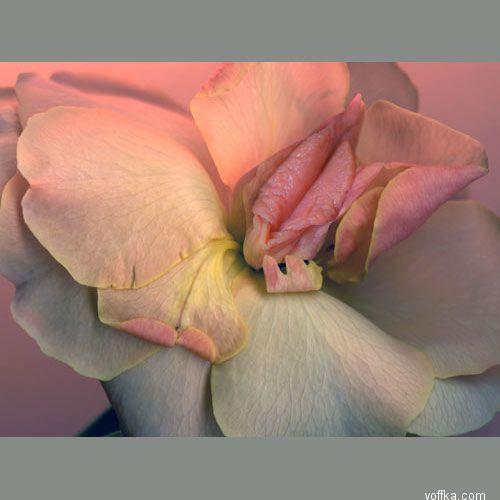 http://voffka.com/pic/zvet_lepests/img__9.jpg